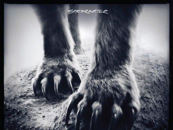 shearwater-animaljoy