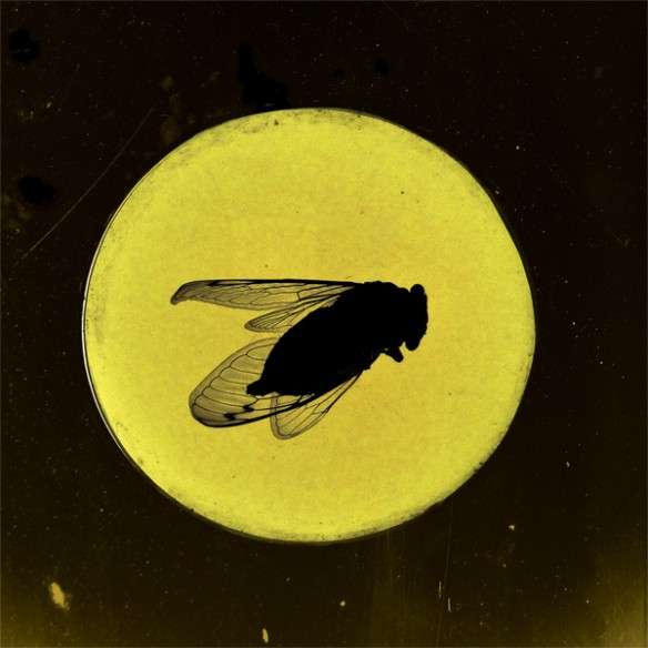 honeylocust-greatsouthernbrooding